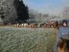 2006_12_28_ausritt_faxihof-057_bearb
